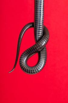 Details des bauches im schwanz einer schwarzen schlange.