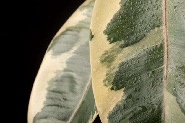 Details zu den texturen von zimmerpflanzen