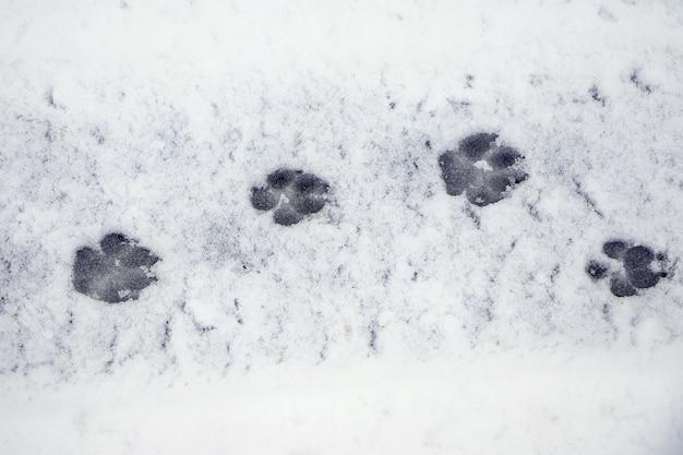 Deutliche spuren eines hundes auf nassem schnee
