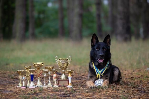 Deutscher schäferhund mit auszeichnungen auf natürlichem hintergrund
