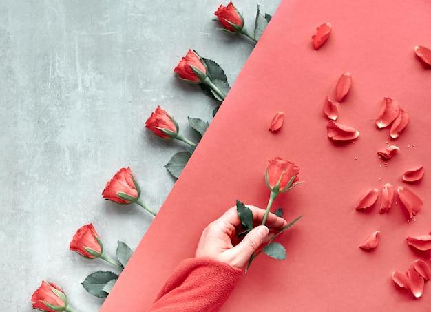 Diagonaler geometrischer papierhintergrund auf stein. flache lage, weibliche hand, die rote rose, verstreute blütenblätter hält. draufsicht, grußkonzept für valentinstag, geburtstag, muttertag oder andere kleine gelegenheit.