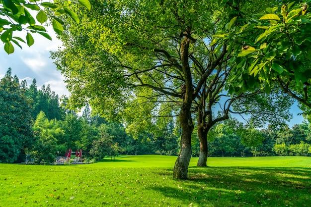 Dichte wälder und wiesen im west lake park, hangzhou