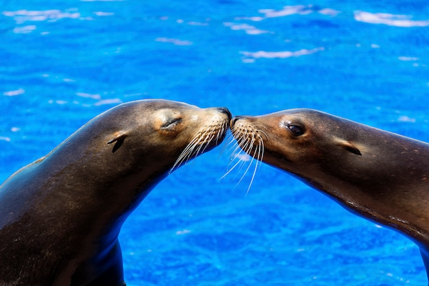 Dichtungen küssen mit wasser hintergrund