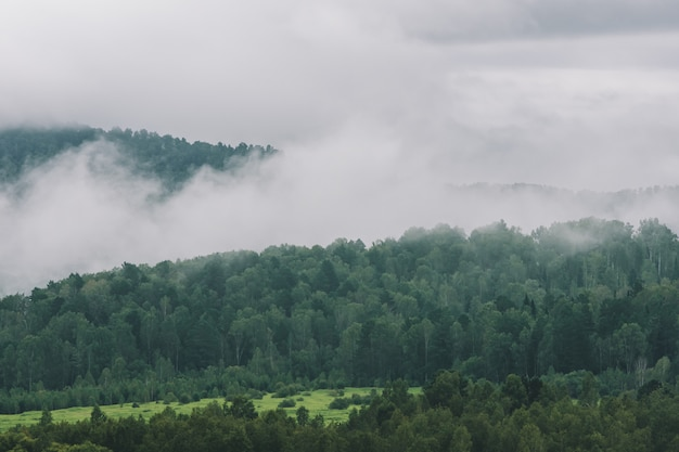 Dicker nebel in bergen mit kopierraum auf nebel. vintage neblige landschaft der majestätischen natur in verblassten grüntönen im hipster-stil. undurchsichtiger dunst zwischen hügeln.
