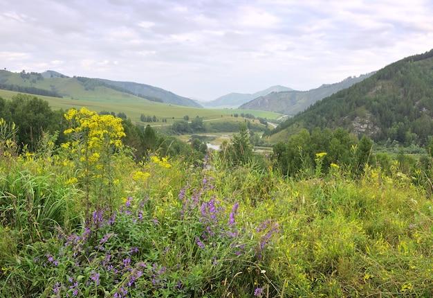 Dickicht von hellen wildblumen vor dem hintergrund der berge unter einem blau bewölkten himmel