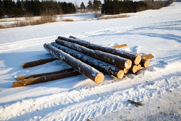 Die abgeholzten bäume, die für baumstämme verwendet wurden