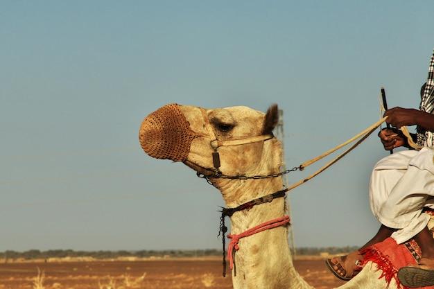 Die alten pyramiden von meroe in der sahara-wüste, sudan