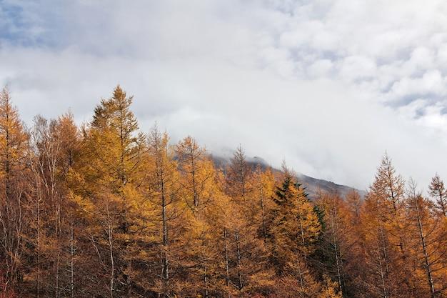 Die ansicht über den nationalpark fuji am herbst, japan