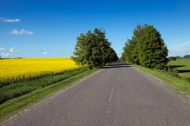 Die asphaltierte autobahn im sommer des jahres.