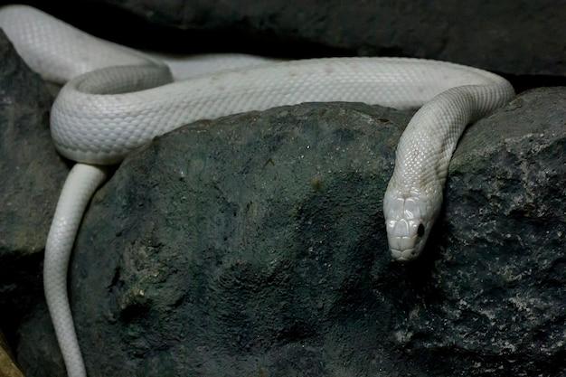 Die augen der schlange sind gruselig.