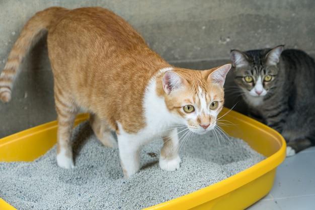 Die ausscheidung von katzen erfolgt täglich.
