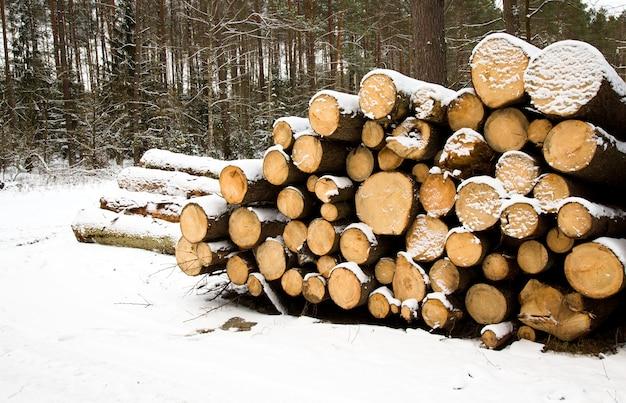 Die bäume fällen und setzen sich in einer wintersaison zusammen