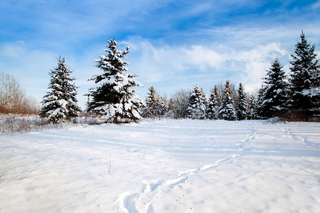 Die bäume in einer wintersaison mit schnee bedeckt