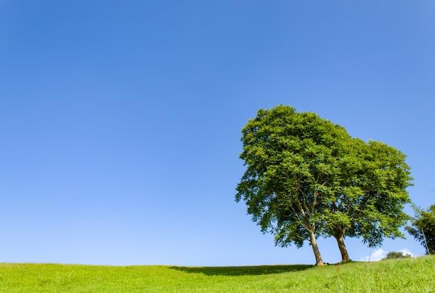 Die bäume und das gras auf den hügeln und den blauen himmel.