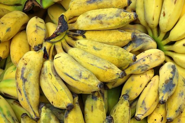 Die bananenpflanze ist die größte krautige blütenpflanze