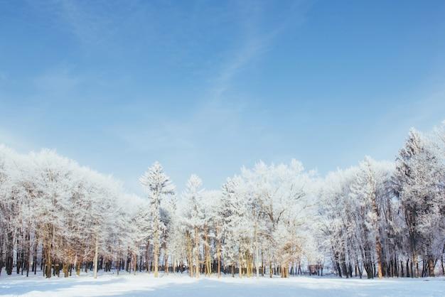 Die baumkronen im schnee. gefrorener schnee auf bäumen. gefrorene bäume auf a des blauen bewölkten himmels