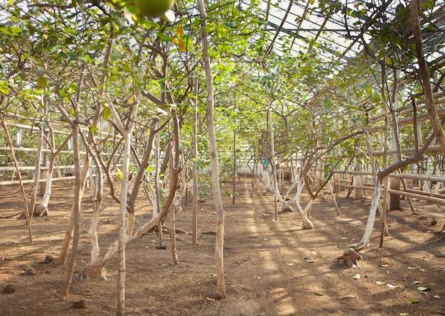 Die baumschule von pflanzen und bäumen für die gartenarbeit