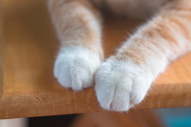 Die beine der kleinen katze sehen süß aus.