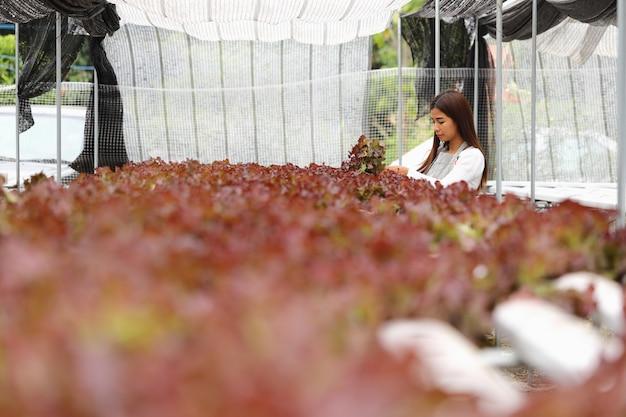 Die besitzerin der hydroponischen gemüsefarm sie und bio-gemüse
