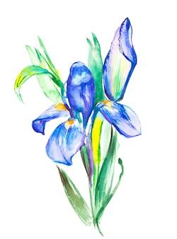Die blühende violette iris der niederlassung. aquarell hand gezeichnete malerei