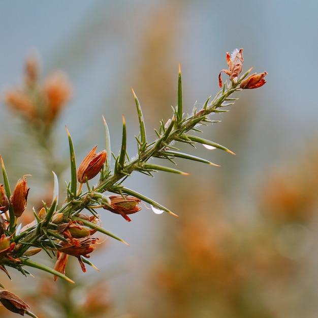 Die blumenpflanze im garten in der natur