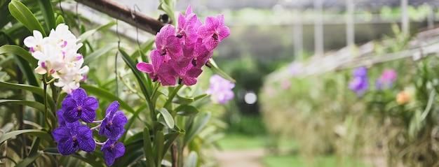 Die bunte orchideenfarmindustrie in thailand