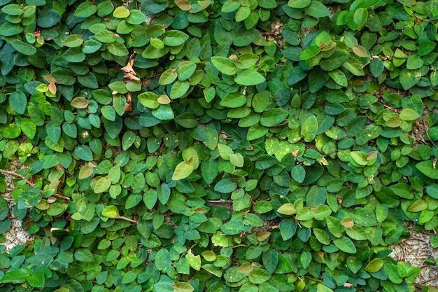 Die einrichtung des hofes. mühle mit grünen pflanzen bewachsen