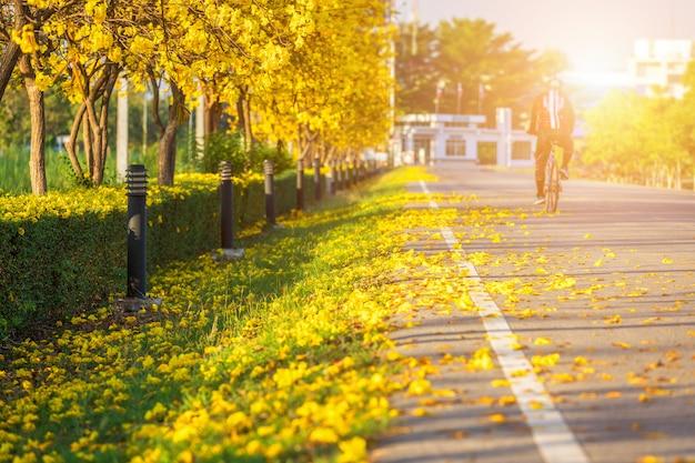 Die fahrradspur im goldenen trompetenbaum am park herein auf hintergrund des blauen himmels.