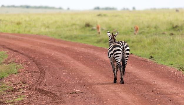 Die familie der zebras weidet in der savanne in unmittelbarer nähe zu anderen tieren