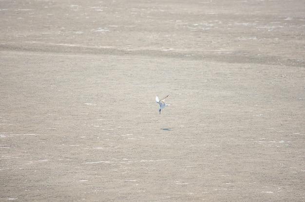 Die fliegenden vögel, die auf sand im meer herumsuchen.