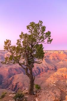 Die form eines schönen baumes im grand canyon bei sonnenuntergang