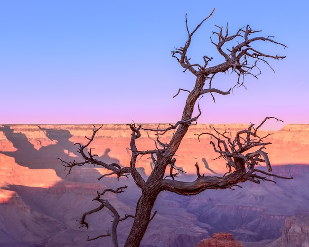 Die form eines schönen trockenen baumes im grand canyon