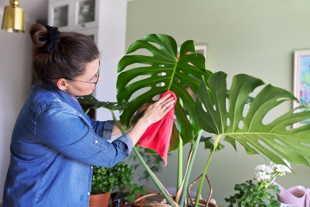 Die frau kümmert sich zu hause um die topfpflanze, die frau reinigt die blätter von monstera und besprüht sie mit wasser. hobbys, hausgartenarbeit, zimmerpflanze, großstadtdschungel, topffreunde-konzept