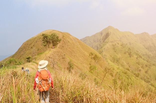 Die frauen, die mit dem rucksack hält trekking wandern, haftet hoch in den bergen, die mit baum im sommer bedeckt werden. landschaftsbeobachtung während einer kurzen pause