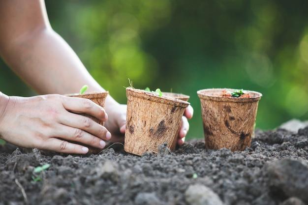 Die frauenhand, die junge sämlinge pflanzt, bereiten herein fasertöpfe im garten auf
