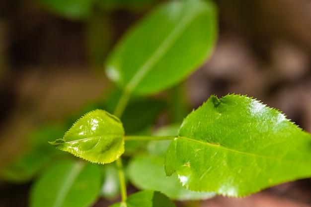 Die frische eines grünen blattes