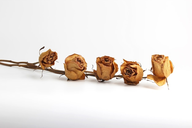 Die fünf getrockneten rosen auf weißem hintergrund