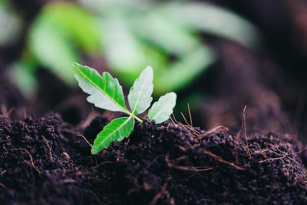 Die gartenarbeit, die eine jungpflanze der baumsämlinge pflanzt, wachsen auf boden mit abwehrumweltgrün-weltökologie