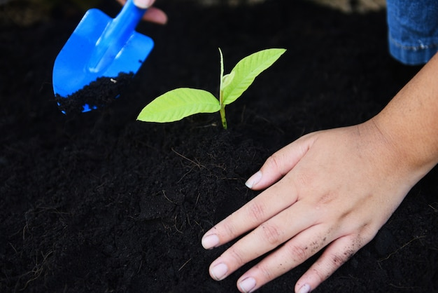 Die gartenarbeit, die eine jungpflanze der baumsämlinge pflanzt, wachsen auf boden mit handfrauenhilfe die umwelt.