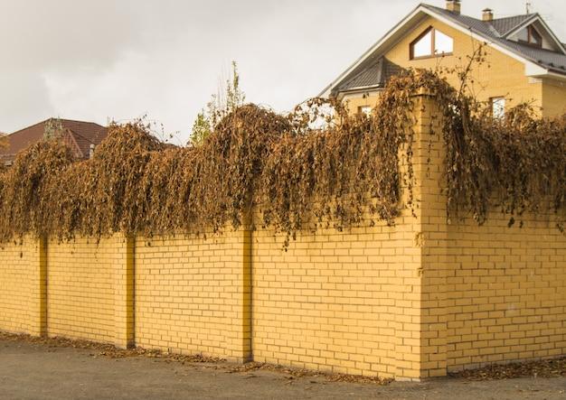 Die gelbe backsteinzaunwand, bewachsen mit trockenen pflanzenzweigen und gras in der herbststraße, im freien