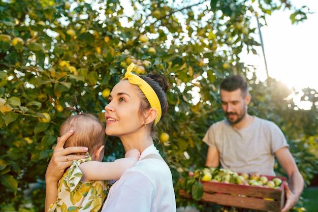Die glückliche junge familie beim pflücken von äpfeln in einem garten im freien