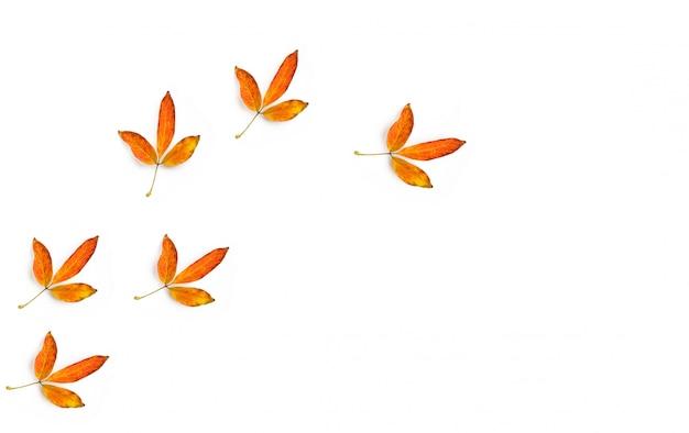 Die goldenen blätter als spur eines vogels auf weißem hintergrund und kopierraum