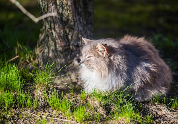 Die graue katze im stadtpark sah die vögel an, die im frühjahr hochflogen