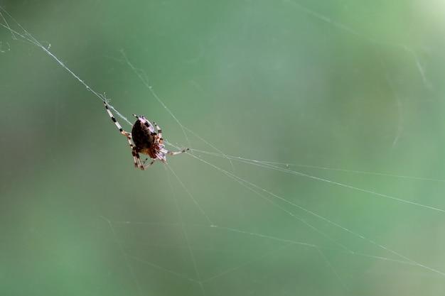 Die große spinne sitzt im netz und wartet auf die vorderansicht des opfers über dem hintergrund der grünen unschärfe