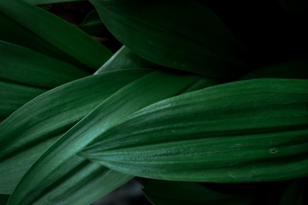 Die grünen blätter