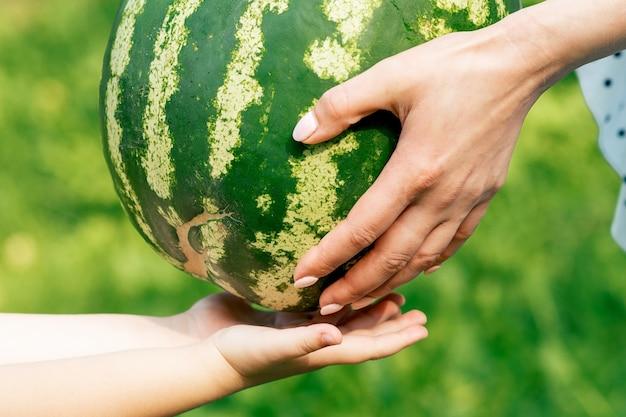 Die hände der frau geben den händen des kindes eine ganze wassermelone aus der nähe.