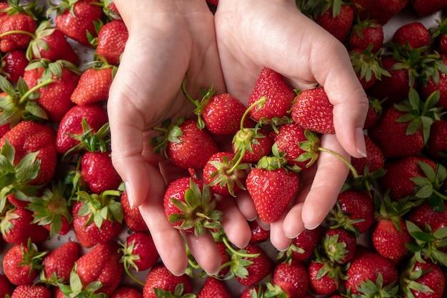 Die hände der frau halten eine saftige reife bio-erdbeere mit grünen stielen. flach liegen Premium Fotos