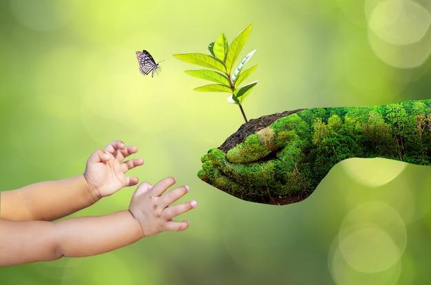 Die hände der natur geben einem baby eine pflanze auf dem boden, mit einem schmetterling und verschwommenem vegetationshintergrund