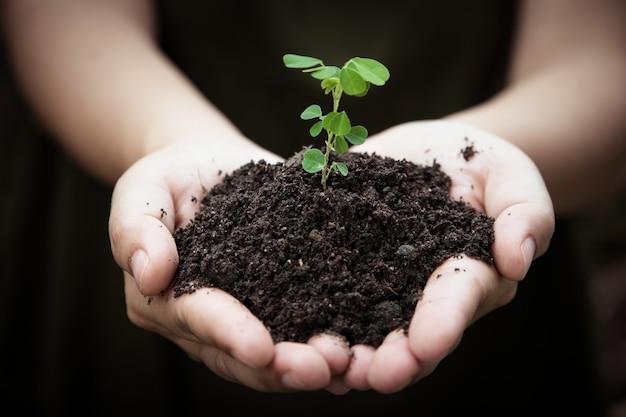 Die hände, die boden mit dem pflanzen des jungen baums halten, gehen symbol grün