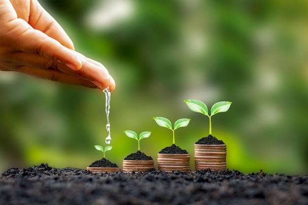 Die hände gießen wachsende pflanzen auf münzen inmitten eines verschwommenen grünen naturhintergrunds, eines finanzkonzepts und eines finanziellen investitionsgewinns.